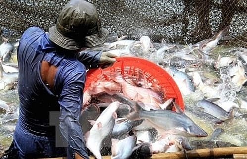 us cuts anti dumping taxes on vietnamese catfish