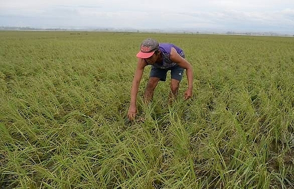 Philippine farmers risk death to save crops from killer typhoon