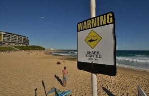 shark attacks 12 year old girl near australias great barrier reef