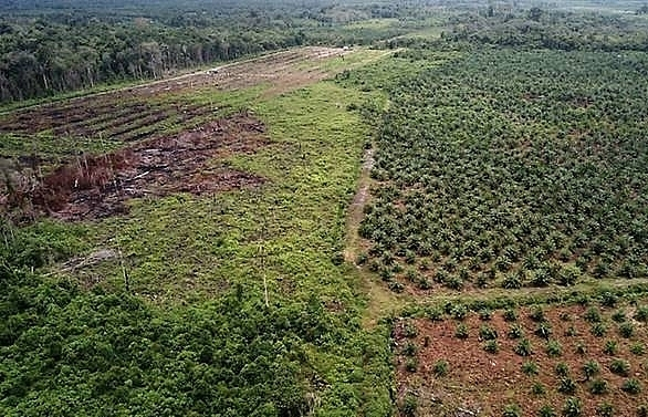 indonesia halts new palm oil plantation development