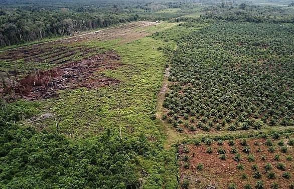 Indonesia halts new palm oil plantation development