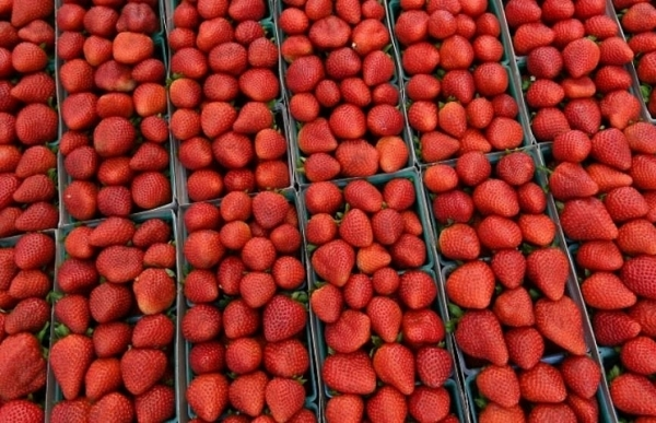 needles found in strawberries at new zealands countdown supermarket report