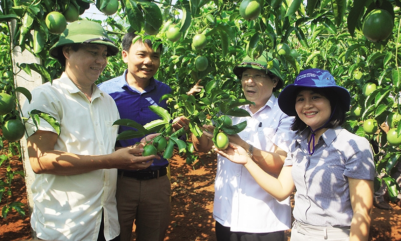 catapulting sustainable agriculture and growth