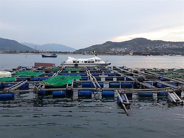 nha trang sets up zone for cage aquaculture