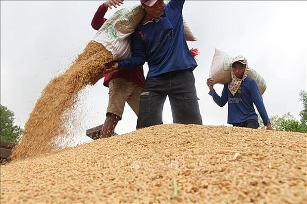 rice industry must diversify products experts