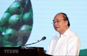 pm domestic macadamia sector needs strategy