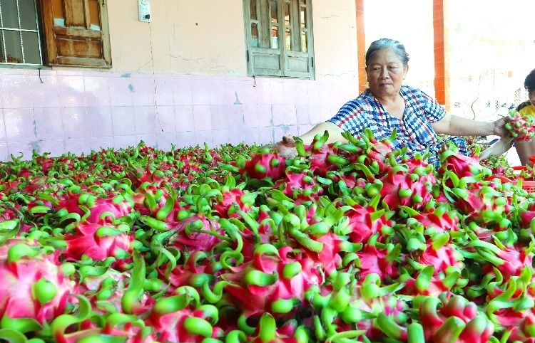 Vietnamese groups grasp German export prospects