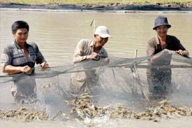 mollusca sector to come out of its shell