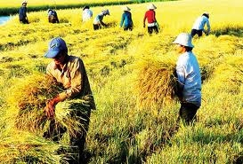 agriculture makes major contributions to asean
