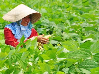Dak Nong ideal for hi-tech agriculture