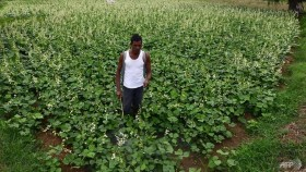 Pesticide poisoning kills 20 farmers in Indian state