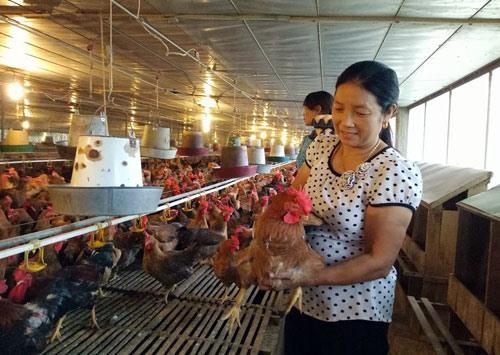 Vĩnh Phúc woman earns billions of đồng from breeding hens