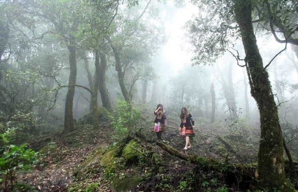 grandiose beauty of ta lien son forest in lai chau