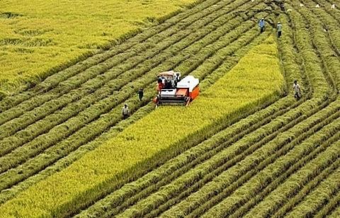 hau giang rok link up on farm tech