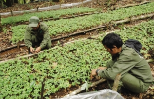 kon tum spurs high tech agriculture development