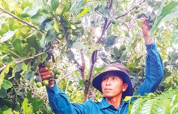 macadamia nuts ripe for billion dollar expansion
