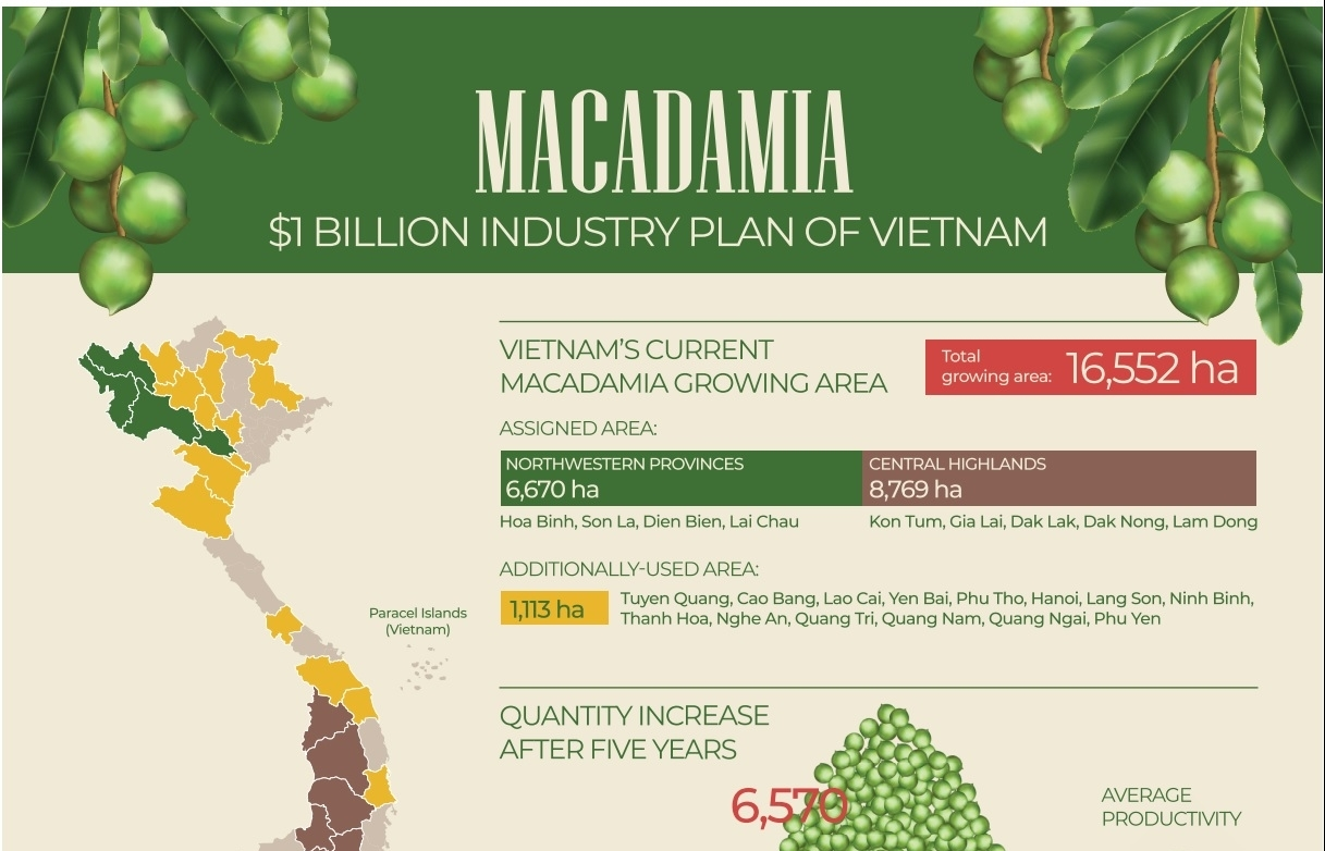 macadamia 1 billion industry plan of vietnam infographics