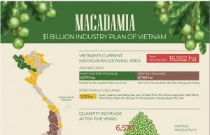 macadamia 1 billion industry plan of vietnam infographics