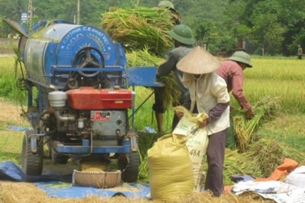 vietnams rice export likely to set record high this year