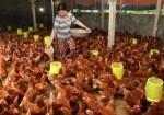 Vietnam faces high risk of A/H5N8 bird flu