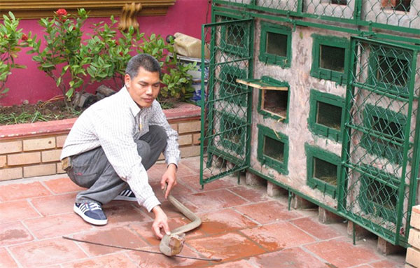 Le Mat Village, eating snakes, traditional medicine, Vietnam economy, Vietnamnet bridge, English news about Vietnam, Vietnam news, news about Vietnam, English news, Vietnamnet news, latest news on Vietnam, Vietnam