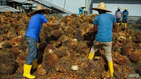 Malaysia, Indonesia to jointly counter EU discrimination against palm oil