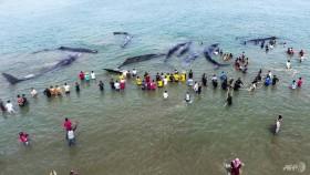 Four sperm whales die in Indonesia beach rescue