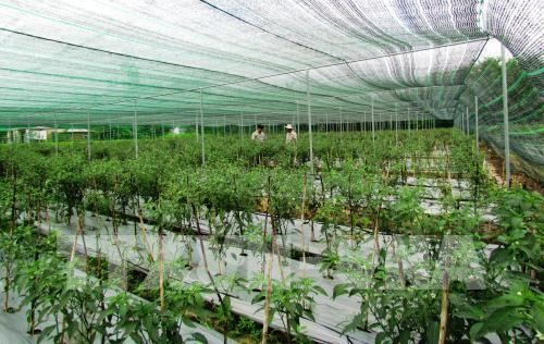 hai phong to develop 5800 hectares of hi tech farms by 2030