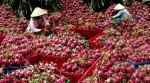 international know how to help local fruit exports