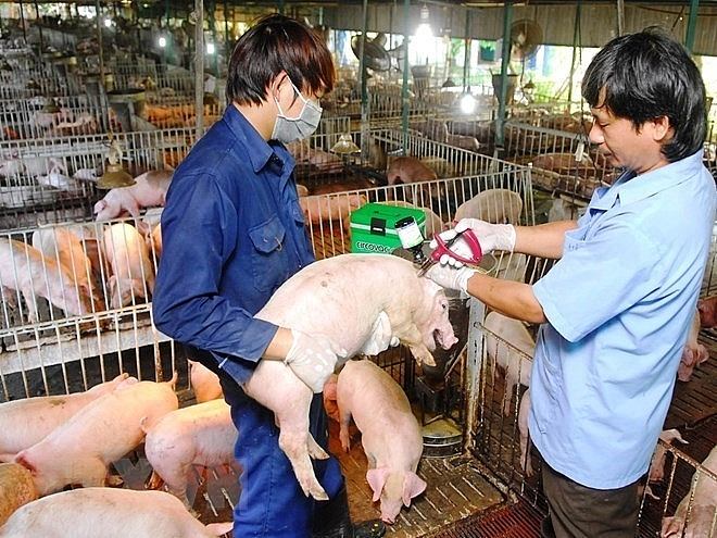 vietnam can now produce foot and mouth disease vaccine