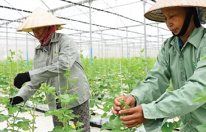 new incentives come to agriculture sector