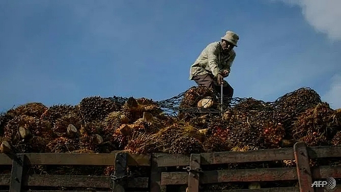 green palm oil push kit kat dove makers could face fines