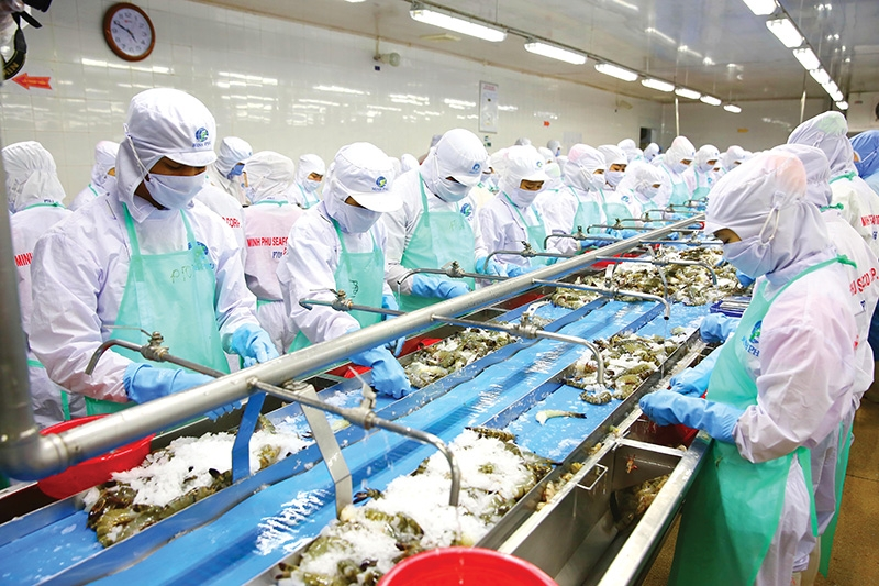 1516 p12 rising shrimp exports require responsibility