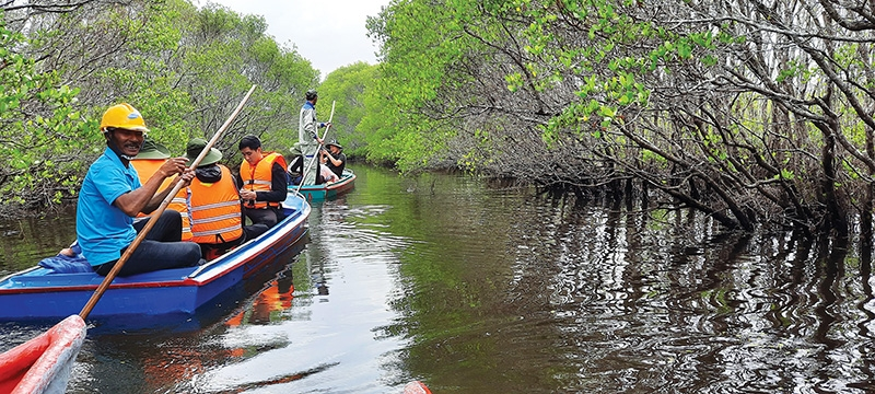 livelihoods transformed with mangrove forest protection