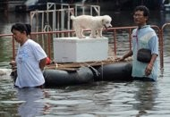 web helps bangkoks flood hit pets find relief
