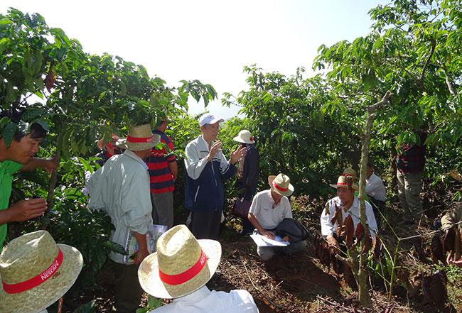 nescafe plan boosts farmers income
