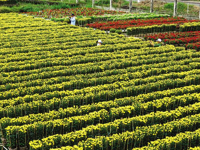jica support modernises agri sector