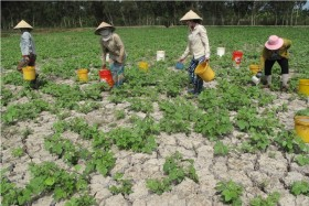 Gov't plans rice farming changes due to new climate