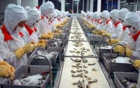 Japan increases checks for antibiotic in Vietnamese shrimp