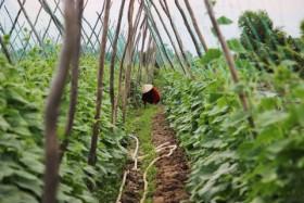 Da Nang seeks hi-tech farm funds