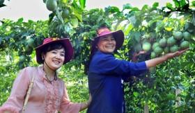 Da Lat market hi-tech farming models, produce