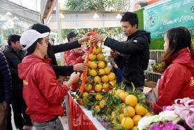 nghe an province promotes vinh orange brand