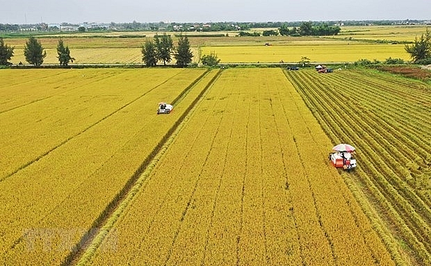 can tho city jica look into agricultural cooperation