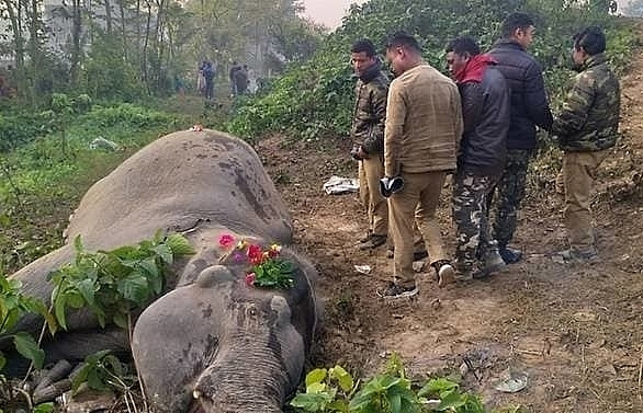 train kills two elephants in india