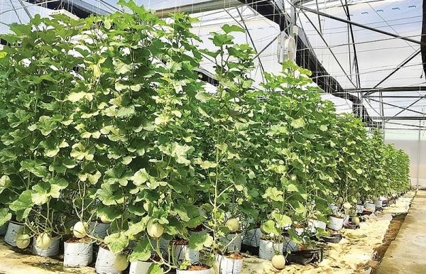 phu yen high tech agricultural park nears completion