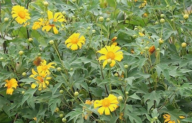 yellow season in basalt land