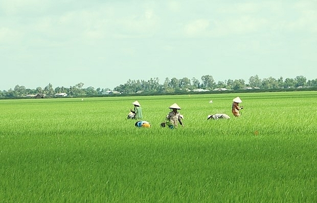 mekong delta may face more serious saline intrusion this dry season