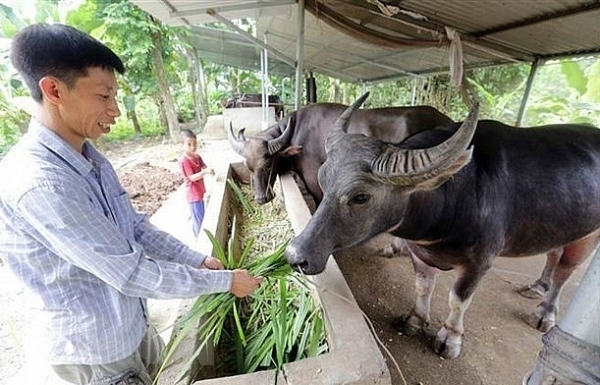 vietnam seeks to develop modern livestock industry