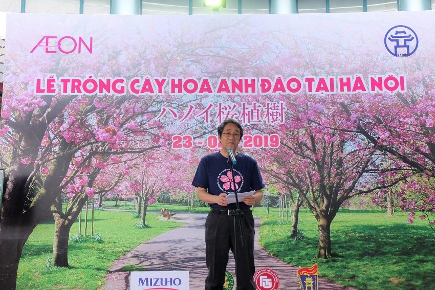 sakura trees beautify springtime in the city of peace