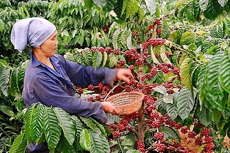 vietnam coffee day 2018 sustainable coffee development